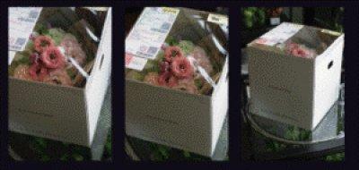 画像1: シランドルアレンジメント
