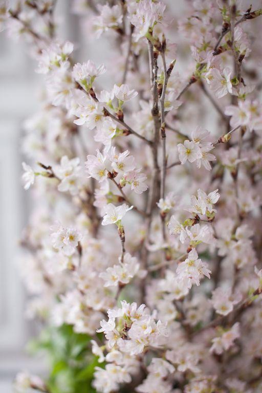 画像2: 桜のシランドルアレンジメント