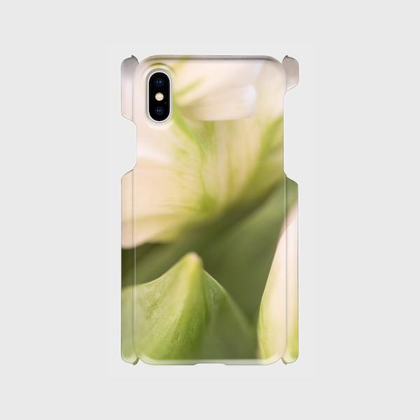 画像1: (Veli tulip) プラスチック スマホケース iPhone用